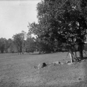 Pasture on Reynolds-Hybrook Farm