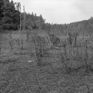 Creek bottom pasture