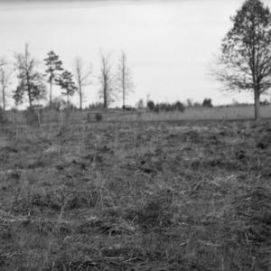 Bluegrass pasture
