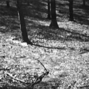 Bare ground on grazed woodland