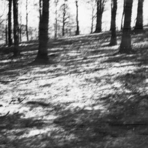Erosion on exposed soil in grazed woodland