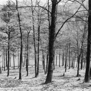 Grazed woodland