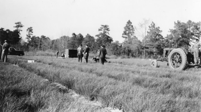 longleaf single guys History and restoration of the longleaf pine-grassland ecosystem: implications for  army of 600+ men across the  and tradition—dating from.