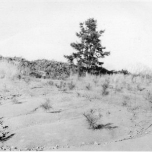 Loblolly pines planted to reclaim eroded hills