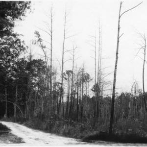 Road which served as a fire break for timber during forest fire