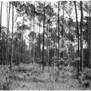 Crop trees left after sawtimber and pulpwood harvest