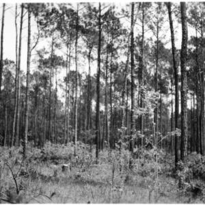 Crop trees left after sawtimber and pulpwood harvest