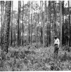 Men standing beside stumps remaining after sawtimber harvest