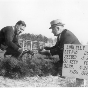 Foresters inspecting loblolly pine seedlings at Clayton Nursery