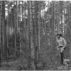 Selective cutting and logging of shortleaf pines