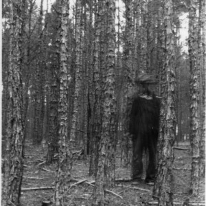 Man standing in shortleaf pine stand