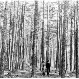 Extension forester and farmer studying results of timber thinning