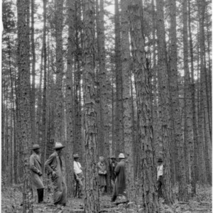 Thinning timber in shortleaf pine forest