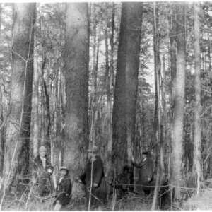 Group standing around giant shortleaf pine