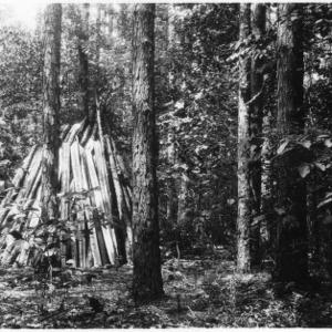 Stacks of wood after thinning shortleaf pine