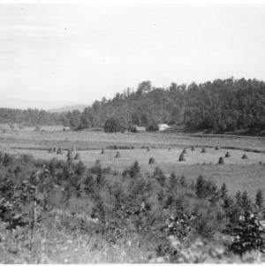 Natural seeding of shortleaf pine