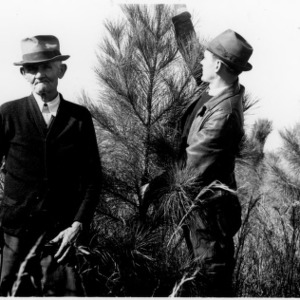 Farmer and county agent inspecting loblolly pine planting