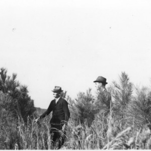 Foresters and farmer inspecting loblolly pines