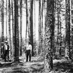 County Agent W. G. Yeager and J. C. Deaton selecting timber for cutting