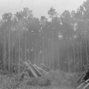 Timber cuttings from land clearing on farm of J. D. Newman