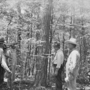 County Agent W. G. Yeager demonstrating use of cruising-stick for timber estimation