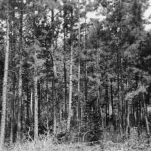 Timber Stand Improvement demonstration on farm of S. L. Brown