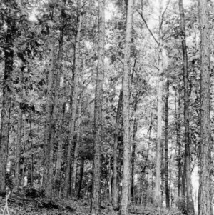 Timber Stand Improvement demonstration on farm of E. H. Brookshire