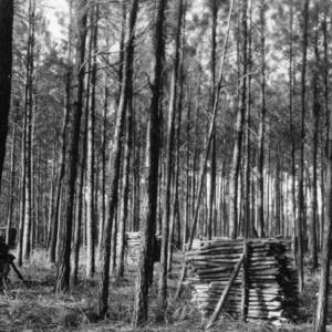 Timber Stand Improvement demonstration on farm of D. L. Mercer