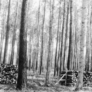 Timber Stand Improvement demonstration on farm of J. R. Mintz