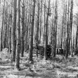 Timber Stand Improvement demonstration on farm of A. N. Carver