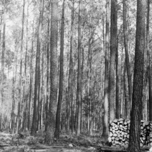 Timber Stand Improvement demonstration on farm of T. M. Bowen