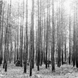 Timber Stand Improvement demonstration on farm of Rachel and D. H. Byrd