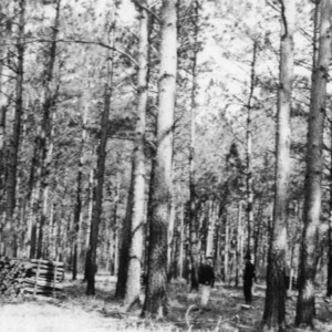 Timber Stand Improvement demonstration on farm of H. C. Bowen