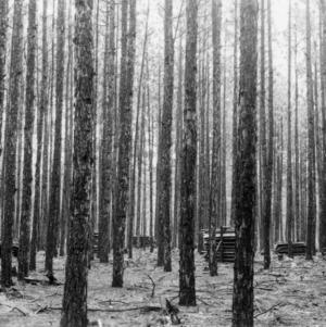 Timber Stand Improvement demonstration on farm of E. C. Johnson