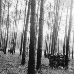 Timber Stand Improvement demonstration on farm of George R. Foulke, Jr.
