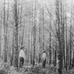 Shortleaf and Virginia pine after thinning on farm of C. G. Hartley