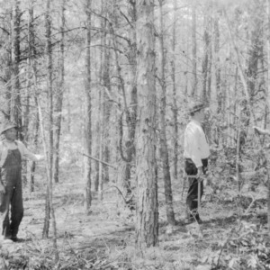 Shortleaf and Virginia pine before thinning on farm of C. G. Hartley