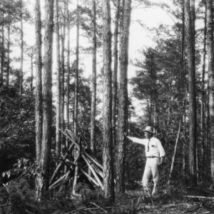 County Agent H. L. Seagrove inspecting timber thinning