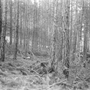 Fred Welborn's timber thinning project