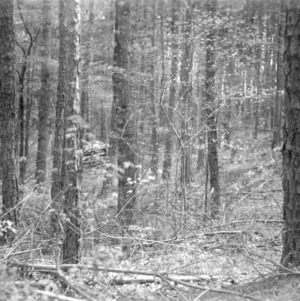 Gwyn Redding's timber thinning project
