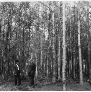 J. H. Frye and other in pine woodlot