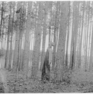 County Agent C. A. Sheffield demonstrating to Clyde Snyder on thinning pines