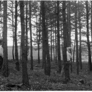 Ralph Hartley conducting forestry demonstration