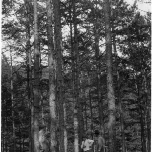 Timber thinning demonstration conducted by G. M. Hatley