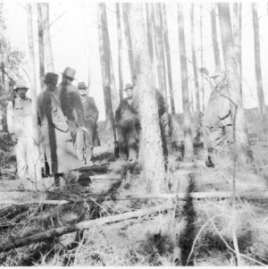 Forestry thinning demonstration