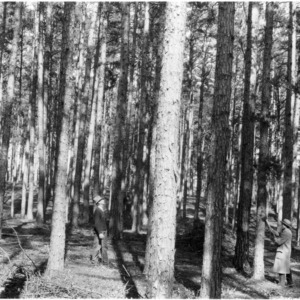 Agent L. F. Brumfield marking tree in timber farming project