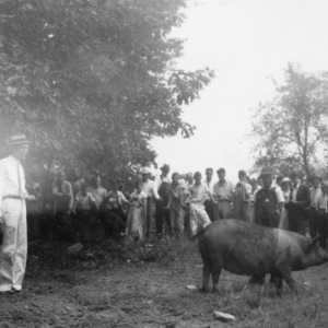 Clarence Ward showing pig to Hendrson County farmers