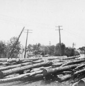 Harvested white oak pilings