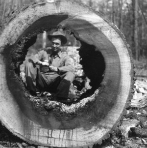 Forester Dan E. Collins looking through hollowed log