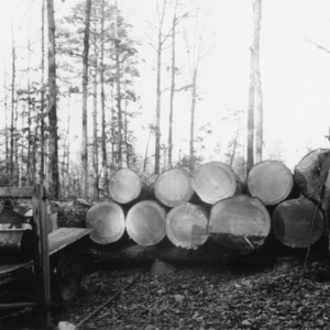 Man in front of mature pine timber